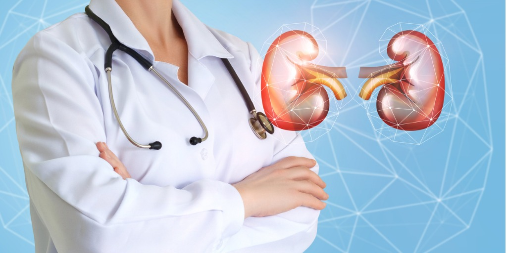 Doctor with Kidney